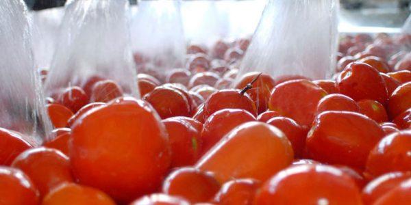 lavado-de-tomates-grupo-transa